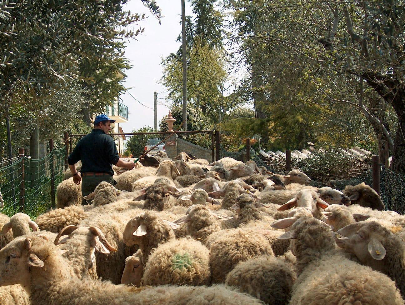 Del pecorino corsi di cucina tipica toscana visite for Vecchie planimetrie della fattoria